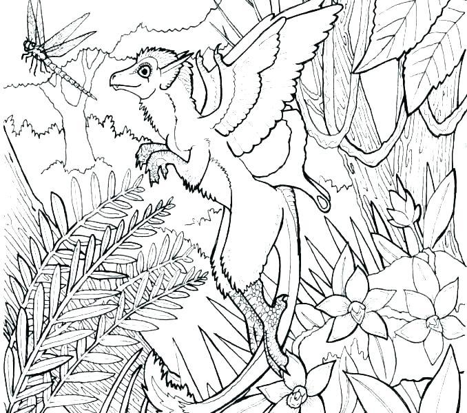 678x600 Rainforest Coloring Pages Printable Coloring Sheets Rainforest
