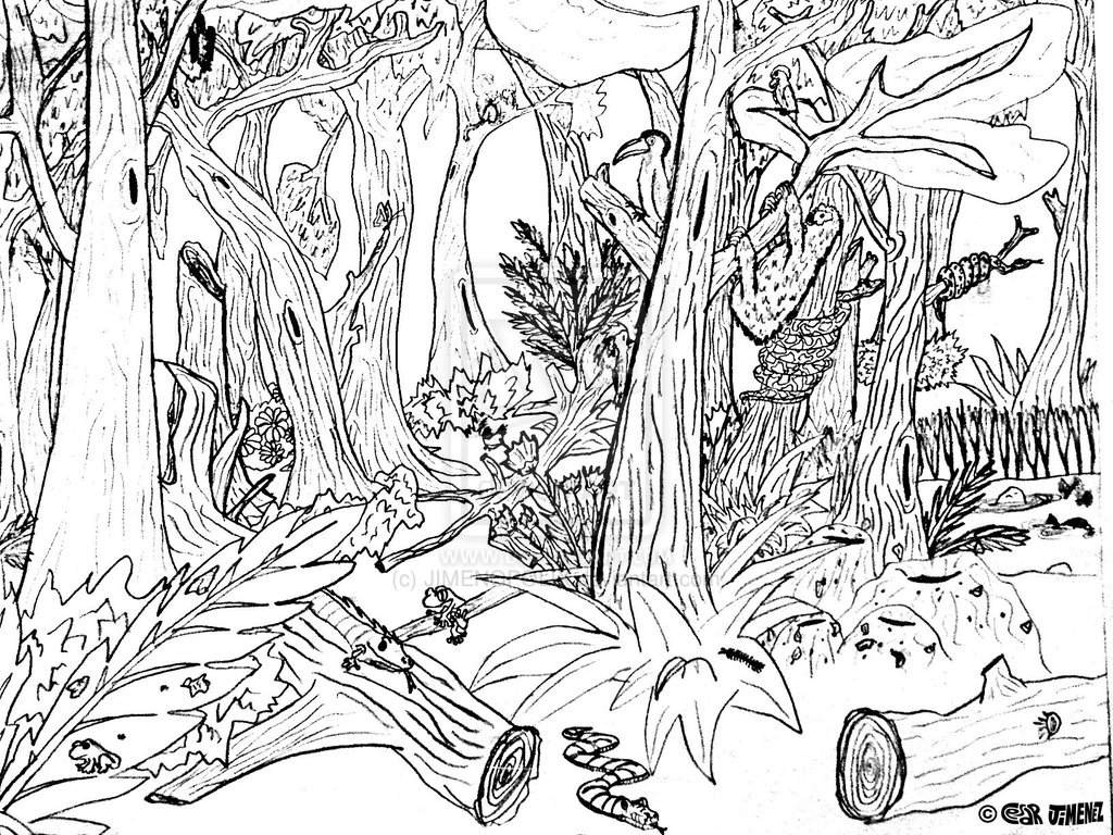 1024x768 Rainforest Coloring Printables Pages Printable Tropical Free