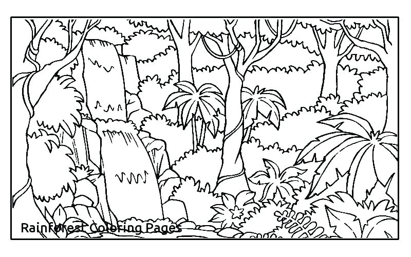 800x500 Tropical Forest Coloring Pages