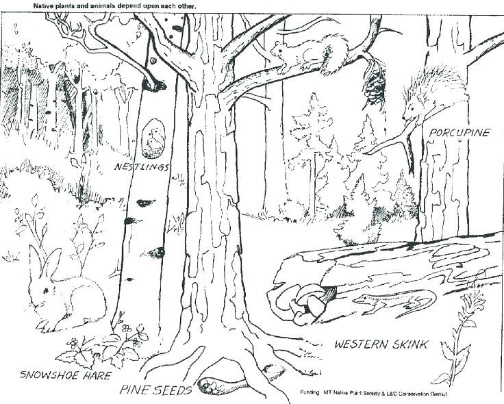 736x590 Rainforest Coloring Pages