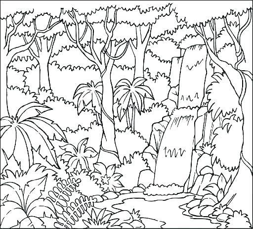 512x463 Rainforest Coloring Pages