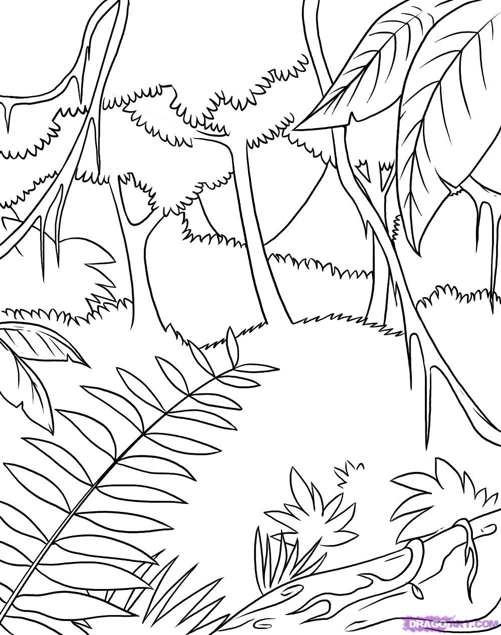 1000x1269 Safari Coloring Pages How To Draw A Rainforest Step Jungle