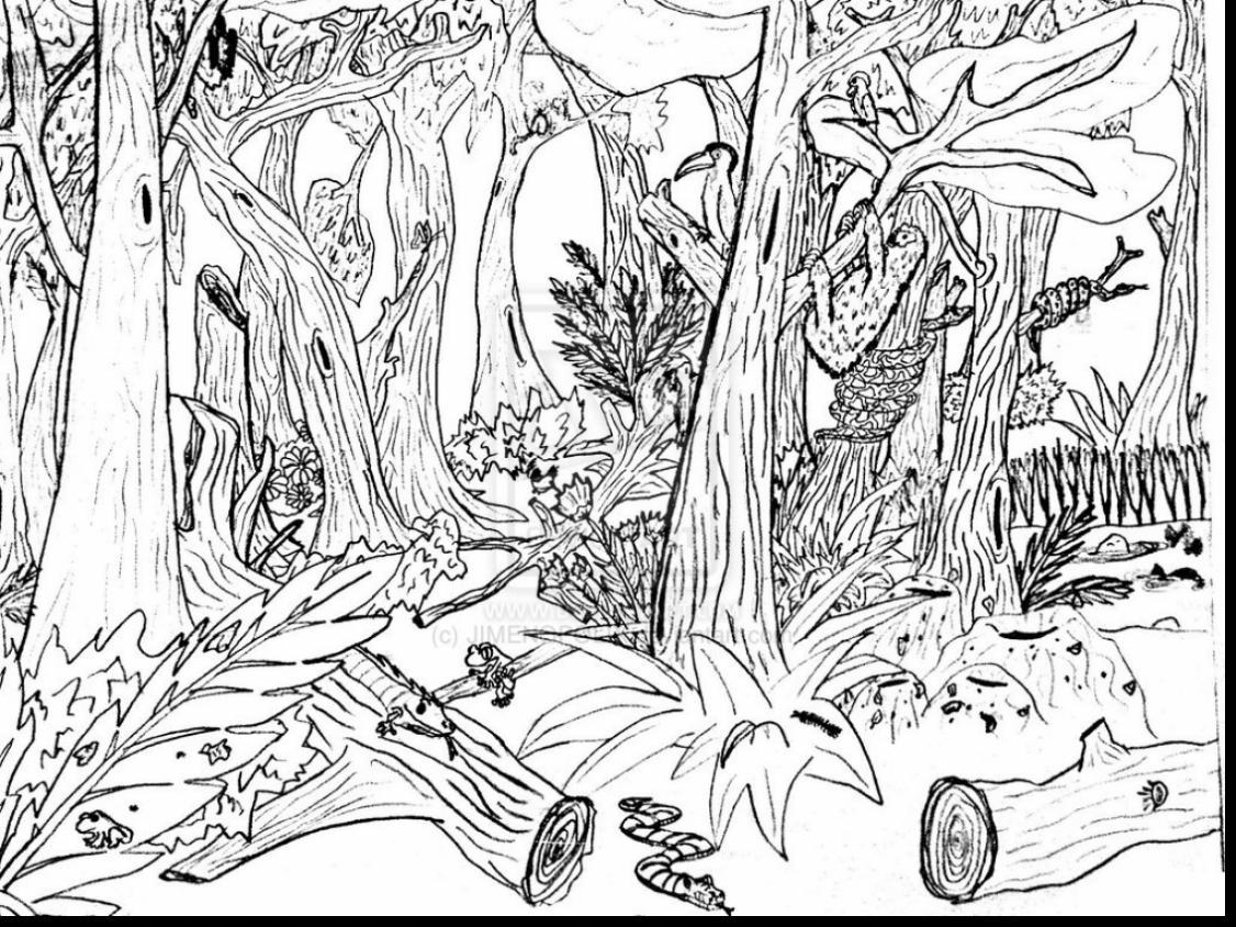 1126x844 Excellent Rainforest Coloring Pages To Print T