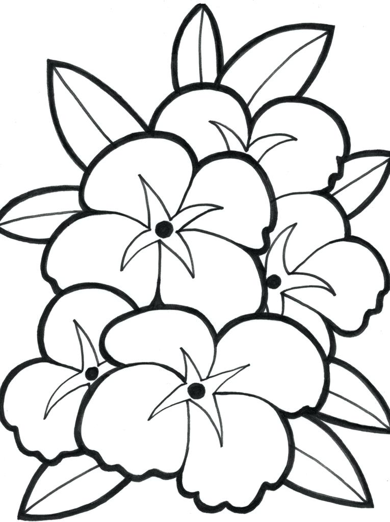 765x1024 Plants Coloring Pages Begonia Plant To Print Desert Animals Free
