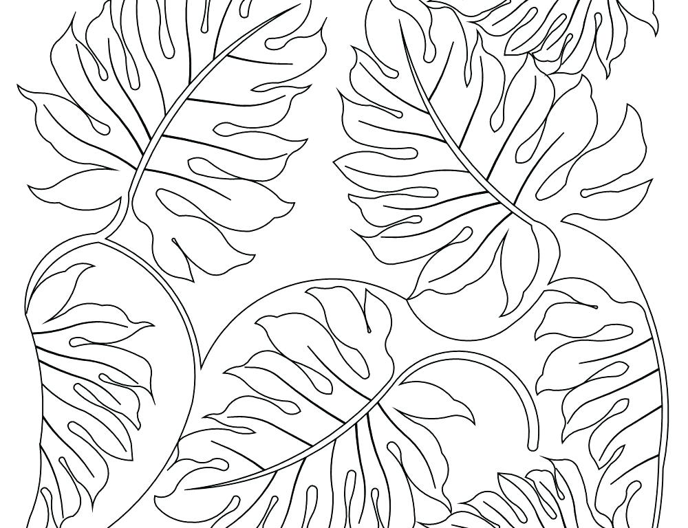 1000x768 Plants Coloring Pages Best Plants Coloring Page For Kids Drawing