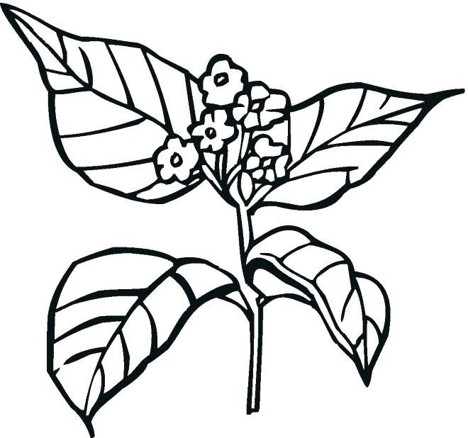 660x618 Plants Coloring Pages Plant Coloring Pages Epic Plant Coloring