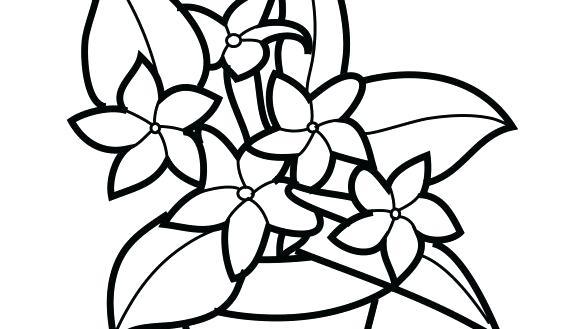 585x329 Plants Coloring Pages Plant Coloring Pages Plants Rainforest