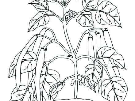 440x330 Plants Coloring Pages Tropical Rainforest Plants Coloring Pages