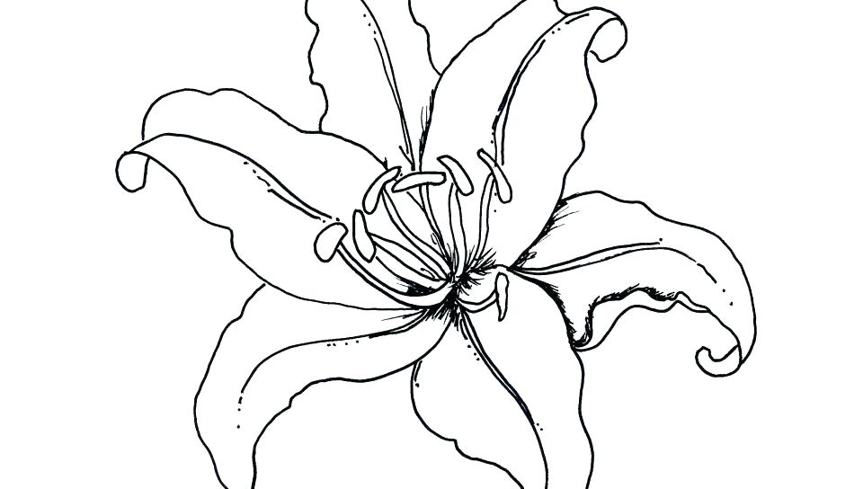 960x544 Printable Pictures Coloring Page Ideas Free Coloring Rainforest