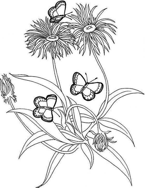 600x779 Rainforest Butterfly And Flower Coloring Page