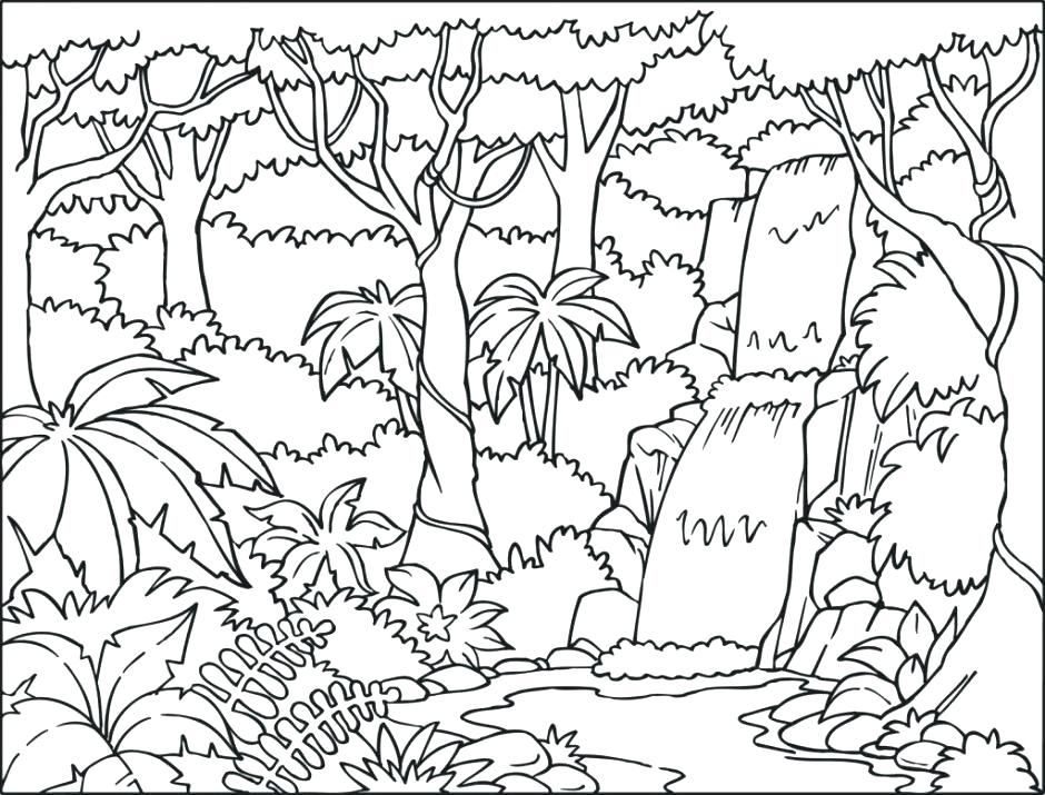 940x715 Rainforest Coloring Pages Drawn Coloring Page Pencil And In Color