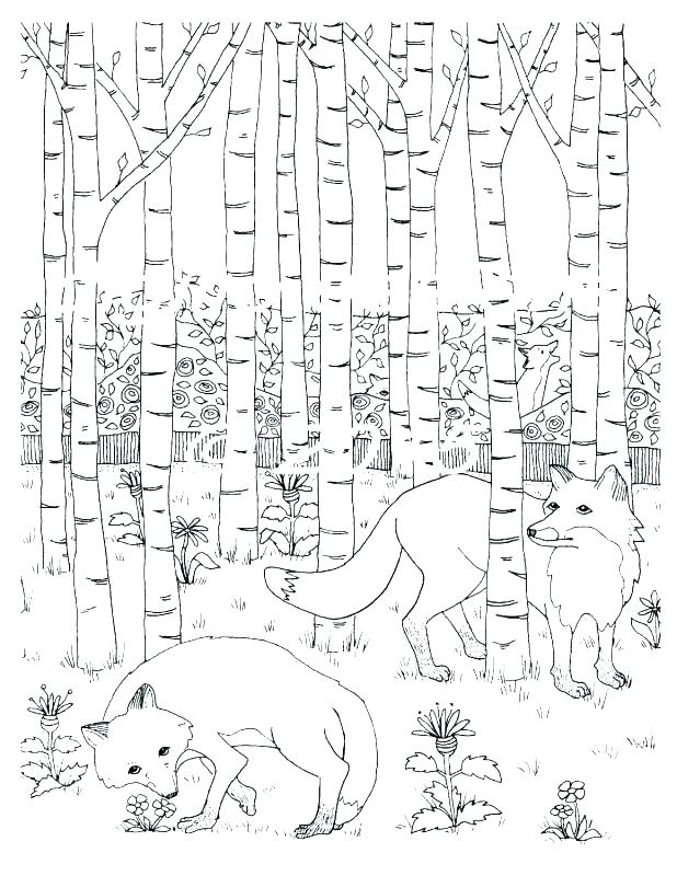 618x800 Rainforest Plants And Flowers Coloring Pages Rain Forest Coloring