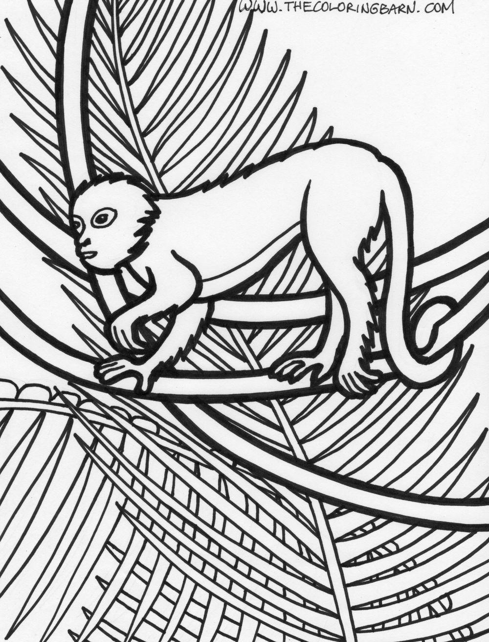 1000x1311 Rainforest Plants Coloring Pages Page Rainforest Monkey Coloring