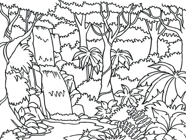 600x453 Rainforest Plants Coloring Pages Explore Activities Plants
