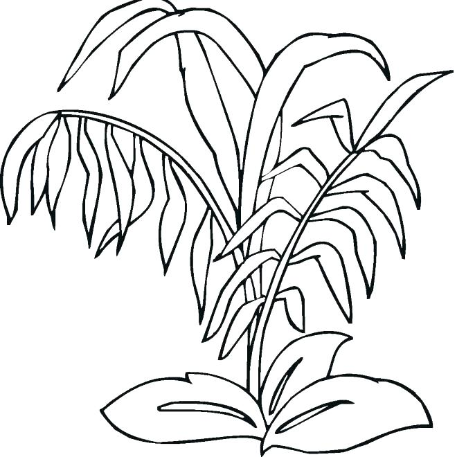 660x660 Coloring Pages Of Plants Plants Coloring Pages Coloring Pages