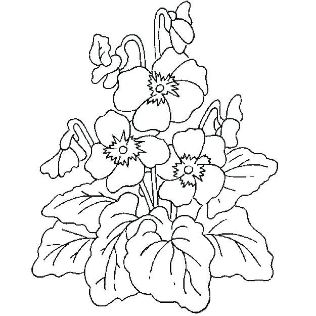 625x625 Rainforest Plants Coloring Pages Plants Coloring Pages Related