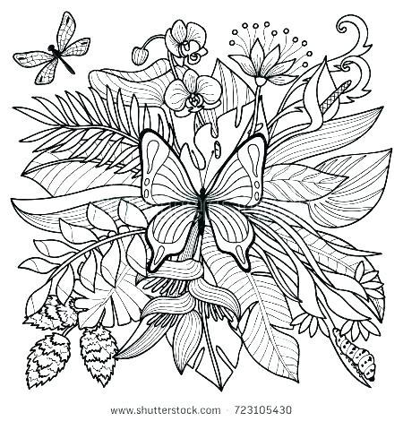 450x470 Rainforest Plants Colouring Pages Tropical Coloring Pages Tropical