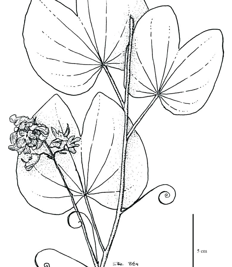 780x900 Tropical Rainforest Coloring Pages Coloring Pages Coloring Pages