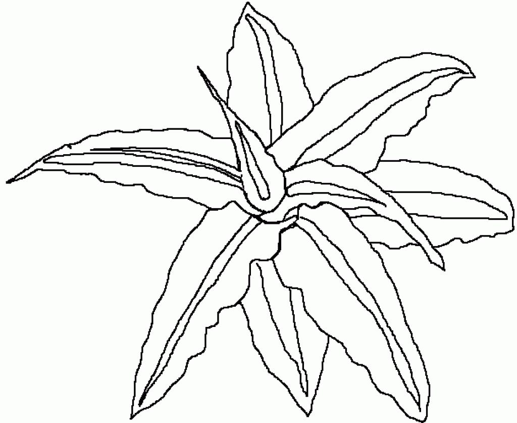 1024x837 Unique Rainforest Flower Coloring Pages Collection Printable