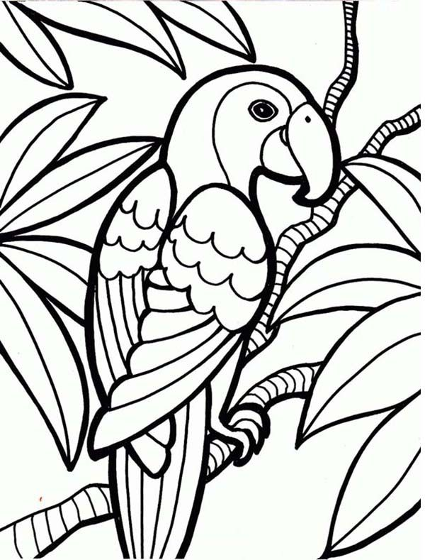 600x789 Rainforest White Faced Monkey Coloring Paper Prints