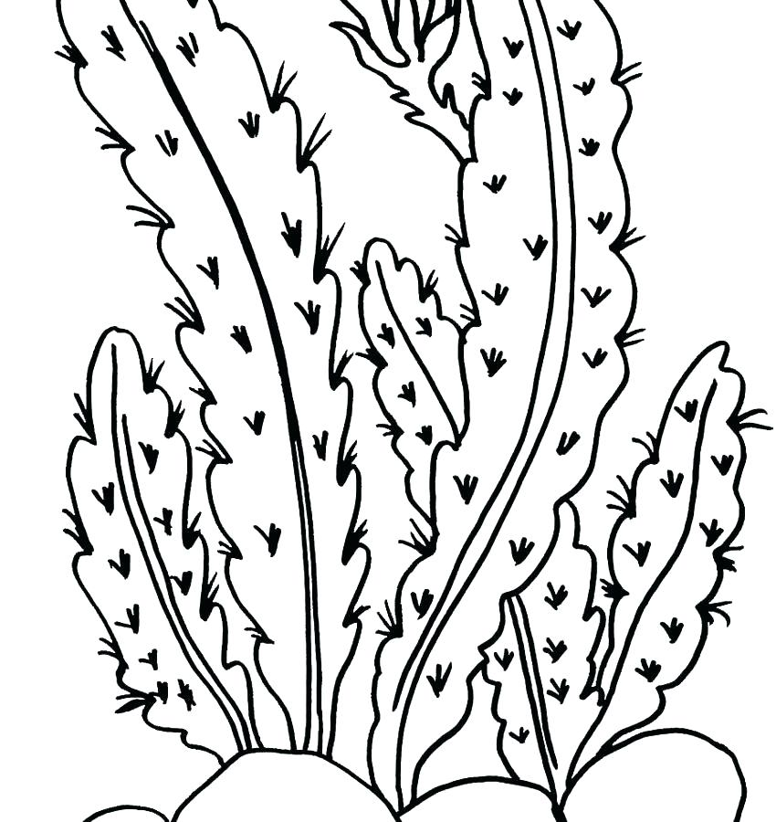 850x900 Coloring Pages Of Plants Plants Coloring Pages Desert Plant