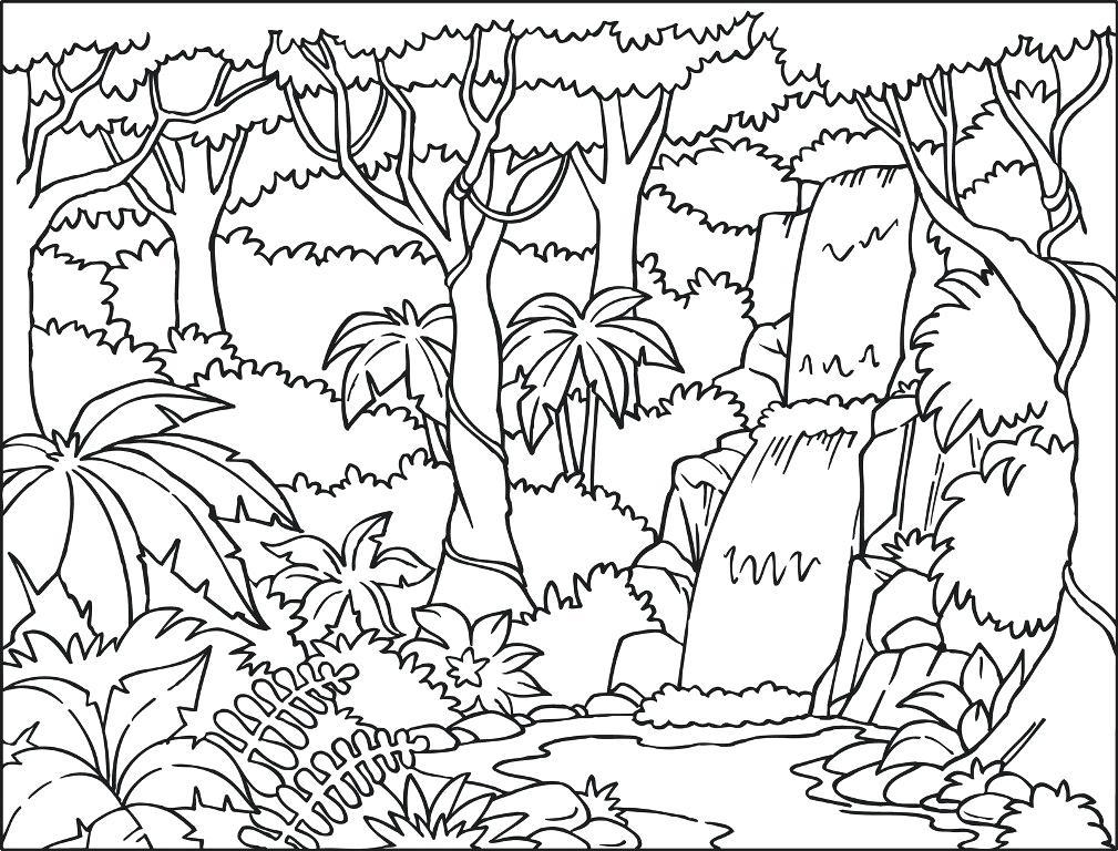 1009x768 Tropical Rainforest Plants Coloring Pages Rainforest Plants
