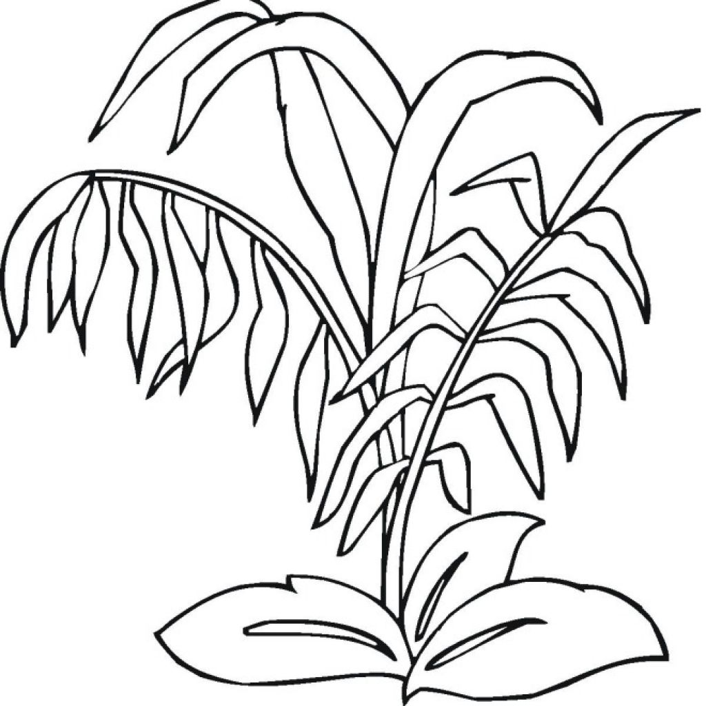 1024x1024 Inspiring Rainforest Plants And Coloring Pages Inside Image
