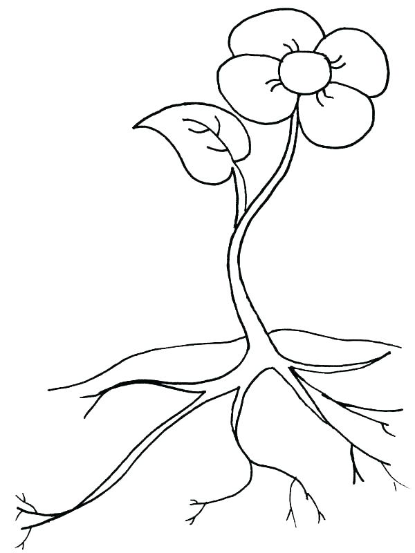 600x800 Plant A Seed Coloring Page Twisty Noodle Potted Plant Coloring