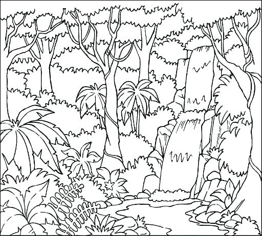 512x463 Rain Forest Coloring Pages Rainforest Trees Coloring Pages