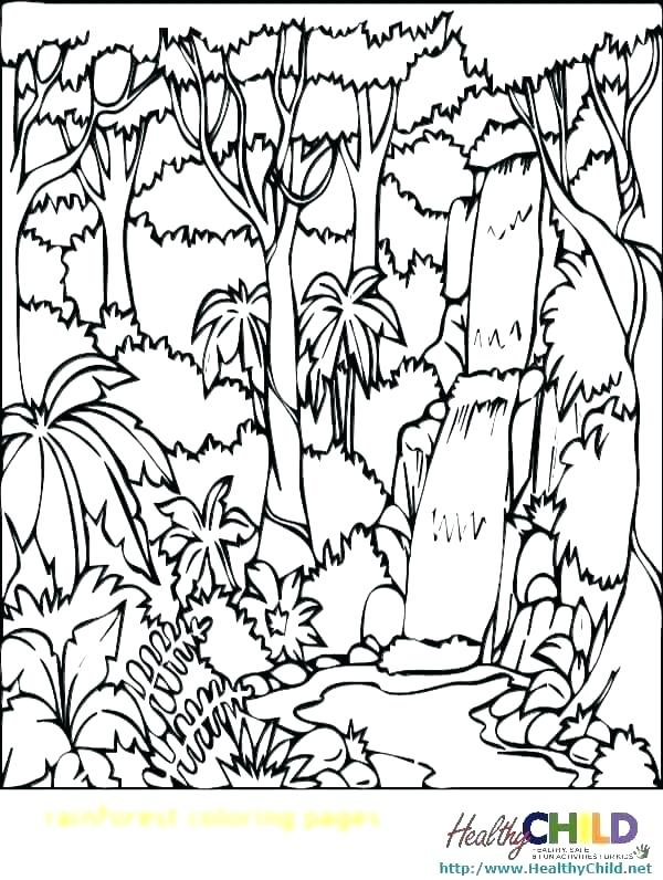600x796 Rainforest Coloring Page Amazon Ll Rainforest Trees Colouring