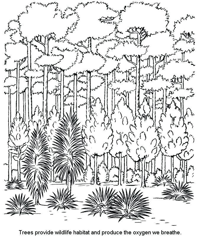 670x820 Rainforest Coloring Page Coloring Pages Unique Color Page Coloring