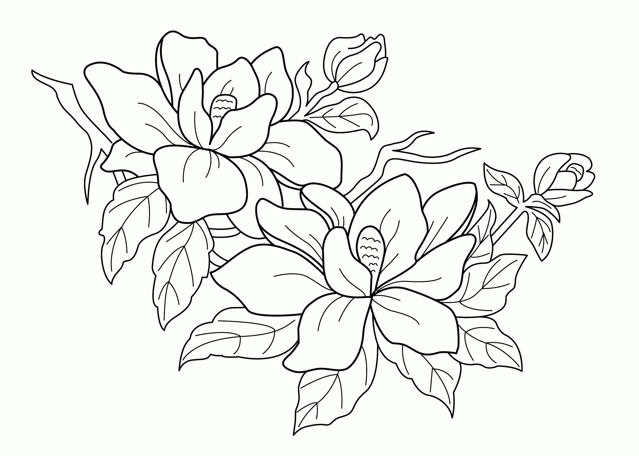 2079x1483 Coloring Pictures Of Flowers And Trees Best Of Coloring Pages