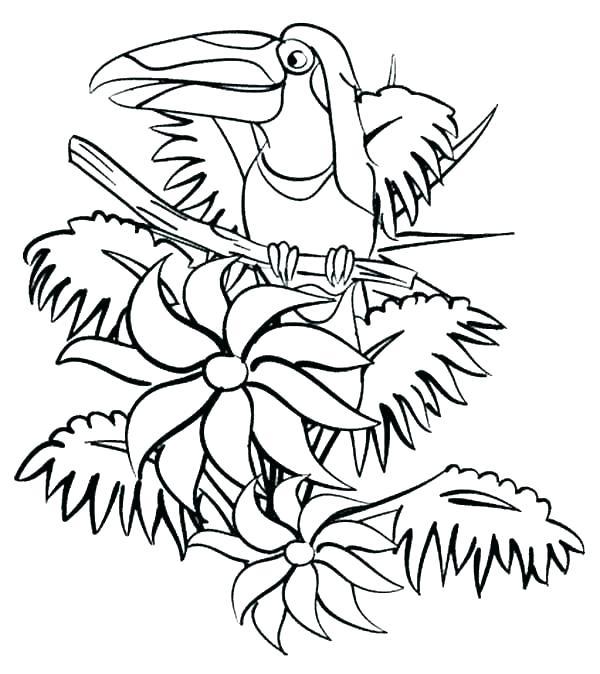 600x674 Rainforest Coloring Page Jungle Coloring Pages Coloring Kids