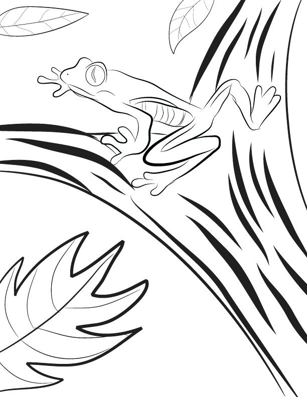 612x792 Rainforest Coloring Pages Amazon Coloring Pages Red Eyed Tree Frog