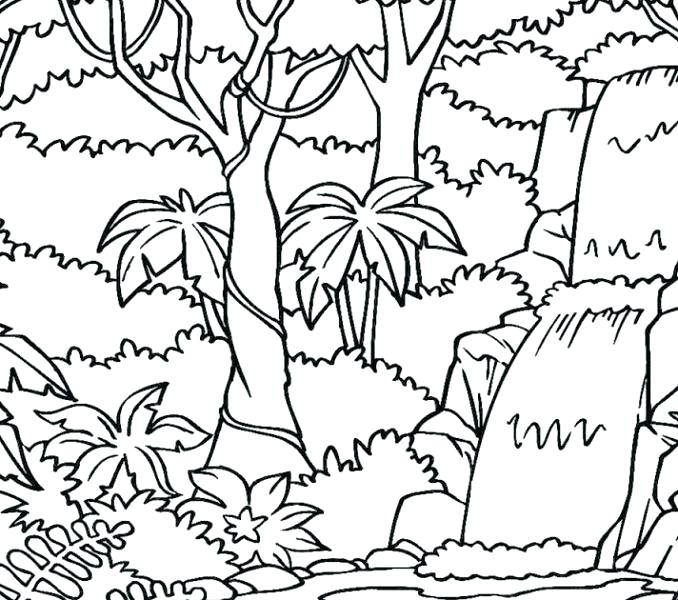 678x600 Rainforest Coloring Pages Coloring Page Rainforest Trees Colouring