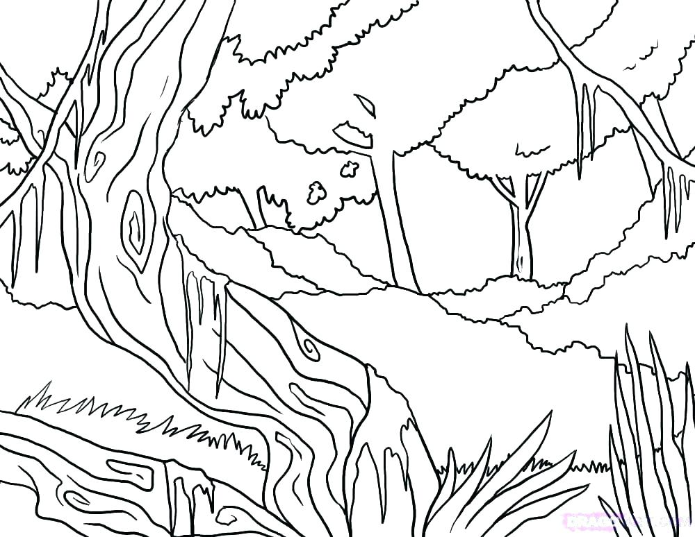 1000x774 Rainforest Coloring Pages Rainforest Flowers Coloring Pages