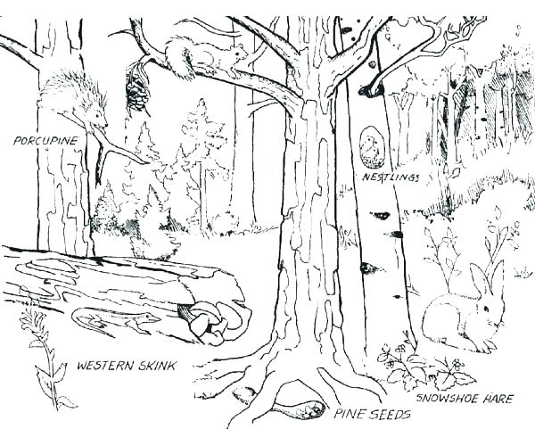 600x481 Enchanting Rainforest Coloring Page Forest Coloring Page Forest