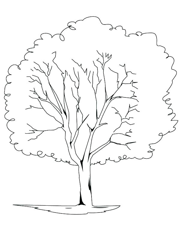 600x776 Rainforest Plants Coloring Pages Animals In The Coloring Pages