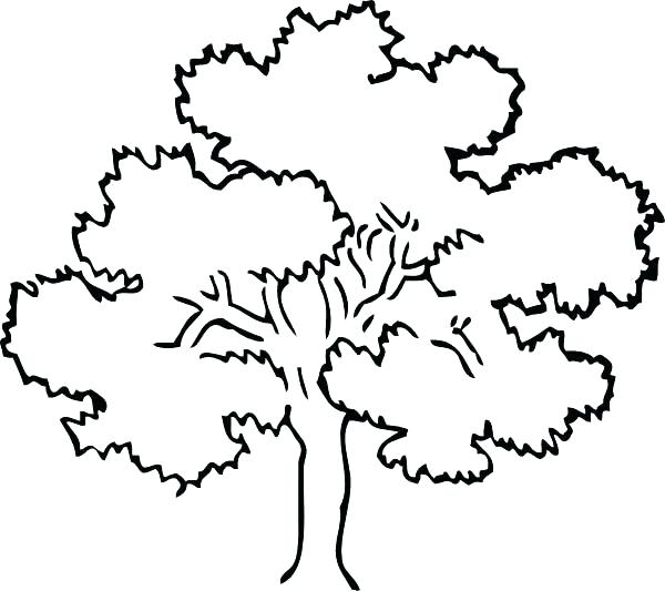 600x533 Trees Coloring Pages Coloring Pages Of A Tree Free Printable Tree