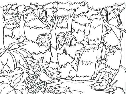 440x330 With Coloring Pages Desert Pictures Books Rainforest Animals