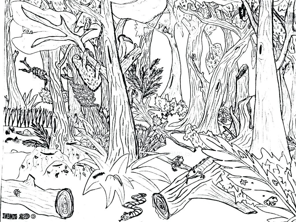 1024x768 Coloring Page Forest Coloring Page Simple Drawing Pics