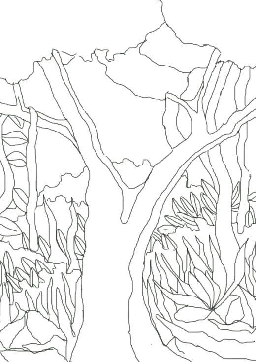 520x735 Rainforest Coloring Pages