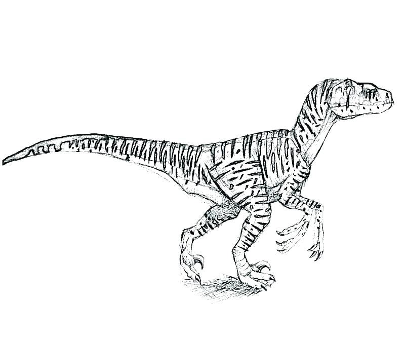 800x667 Velociraptor Coloring Pages Coloring Page Spine Coloring Pages