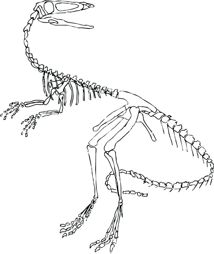 700x828 Velociraptor Coloring Pages Printable Dinosaur Coloring In Sheets