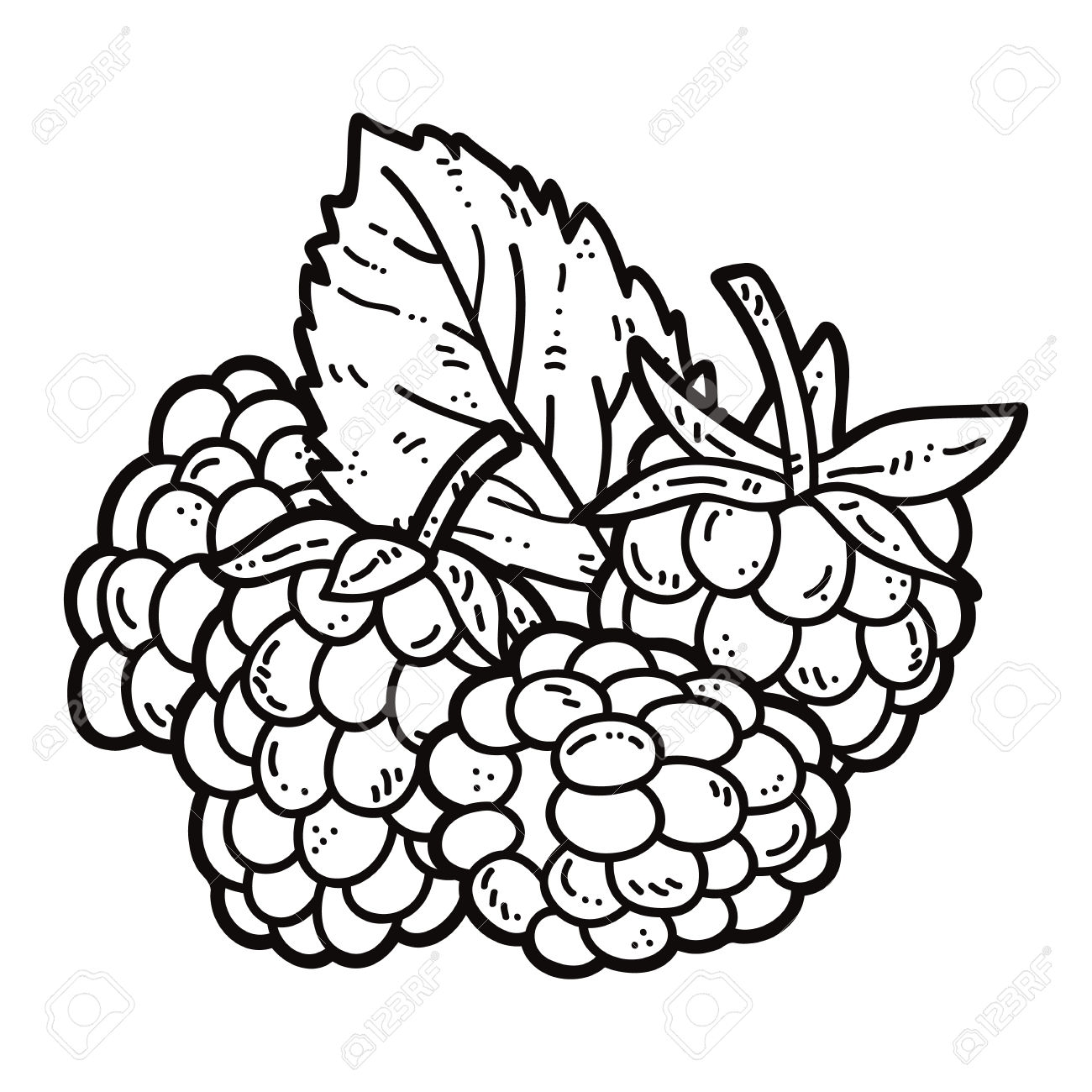 1300x1300 Fresh Raspberries Coloring Pages Design Printable Coloring Sheet