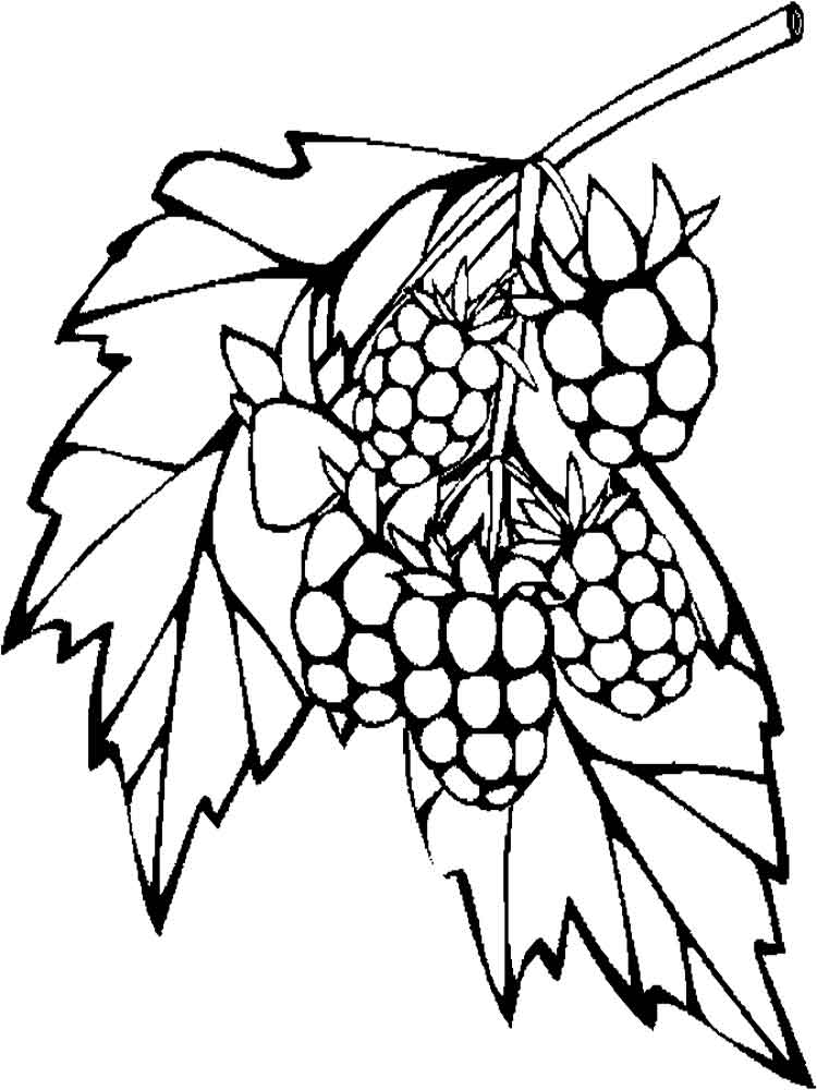 750x1000 Raspberries Coloring Pages Download And Print Raspberries