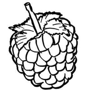 288x288 Raspberry Coloring Page Awesome Raspberries Coloring Pages