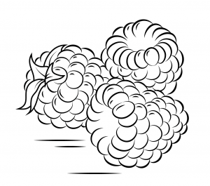 300x265 Raspberry Coloring Pages