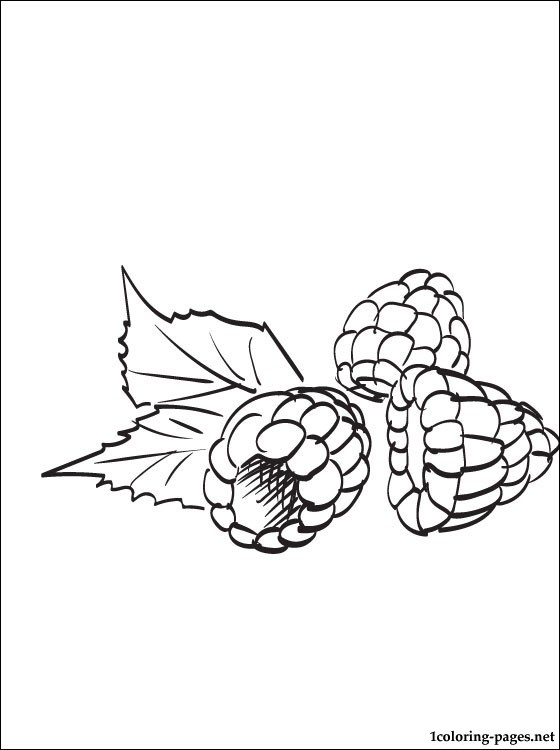 560x750 Raspberry Coloring Page Coloring Pages