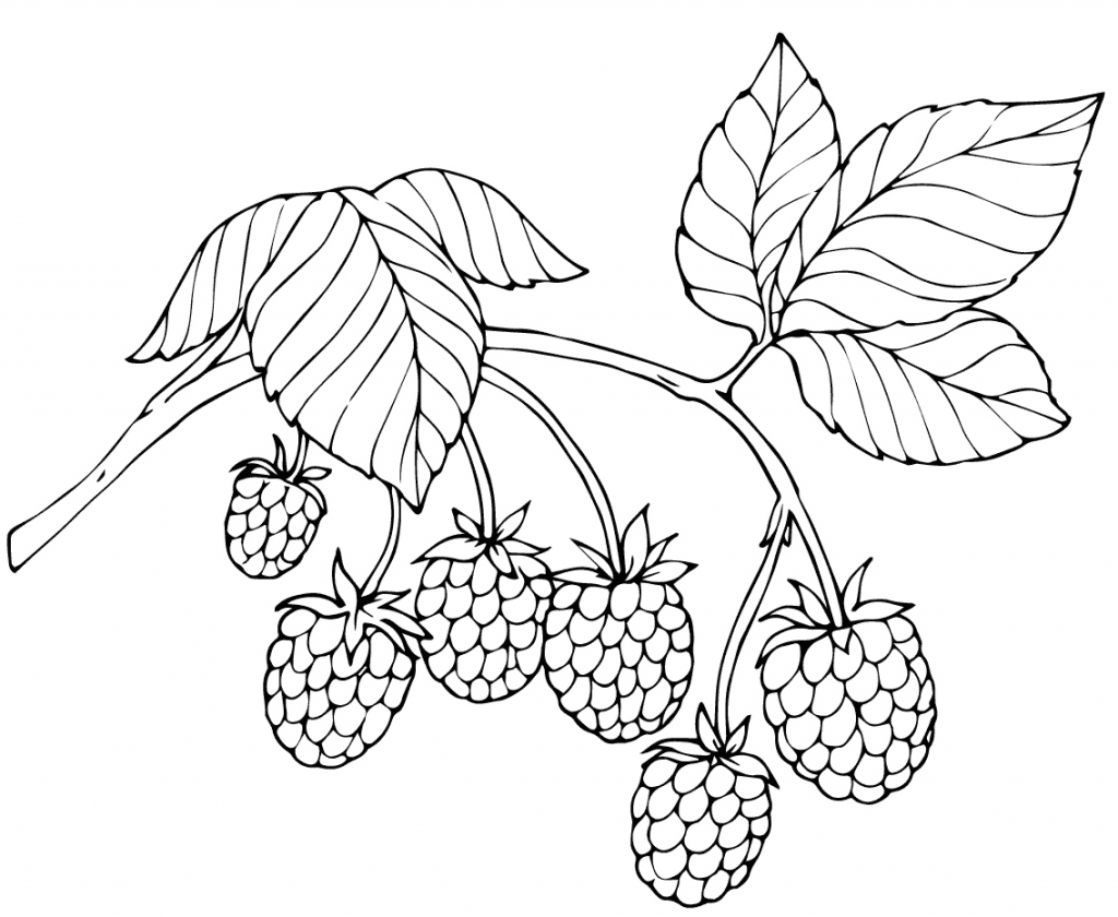 1024x840 Red Raspberry Fruit Coloring Page